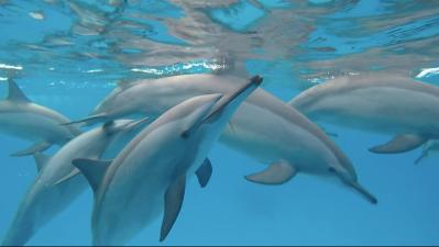 Dolphin trips Nooraya Dolphins